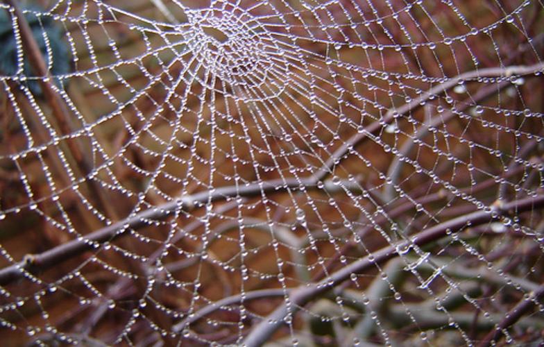 Extra_large_web