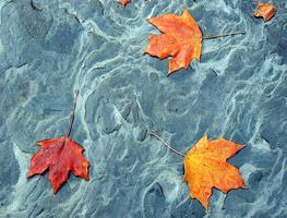 Small_galoviceve_jeseni