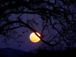 Small_full_moon