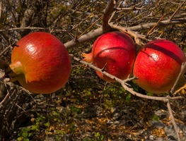 Small_fruit-mature-red-pomegranate-juicy-3916198