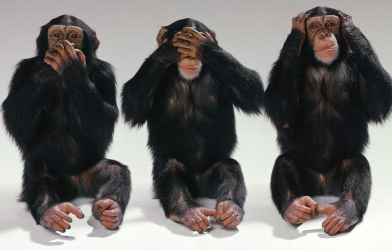 Extra_large_majmuni