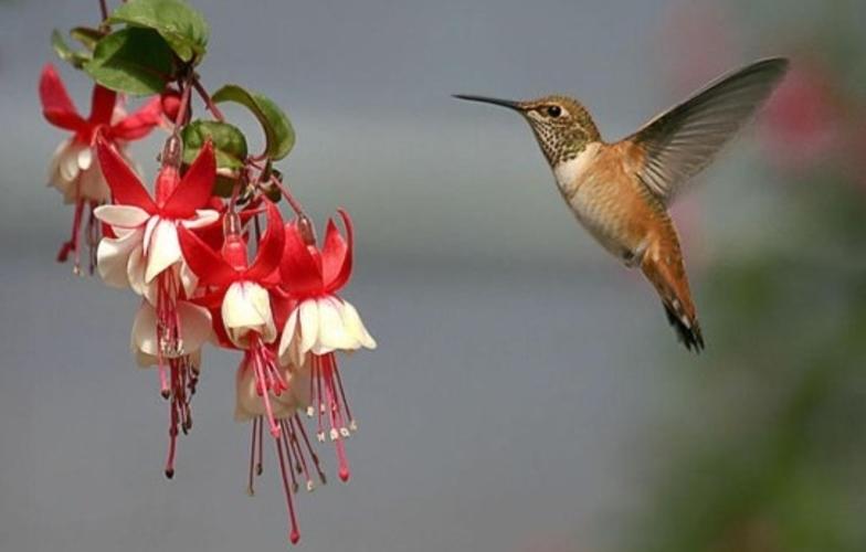 Extra_large_kolibric