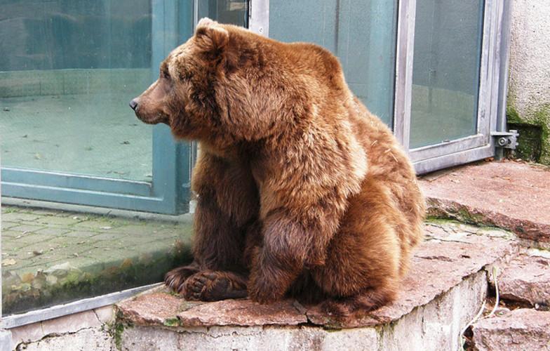 Extra_large_honey_bear