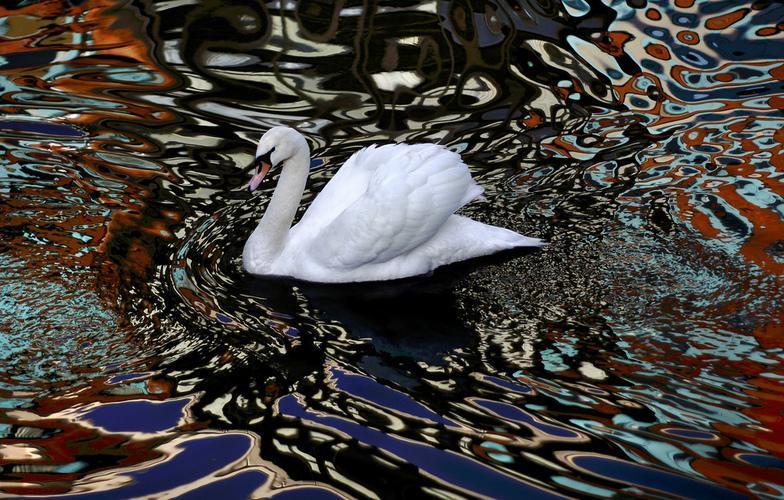 Extra_large_psychodelic_swan
