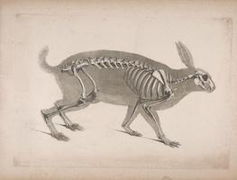 Small_anatomija