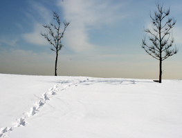 Small_snijeg