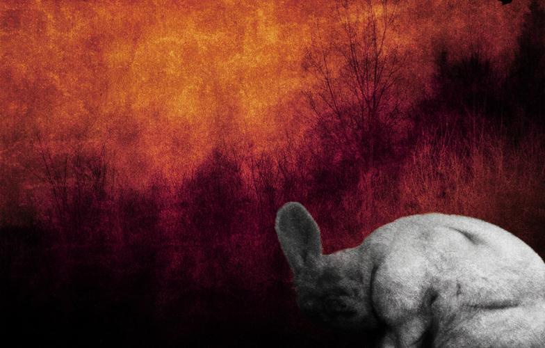 Extra_large_rabbit