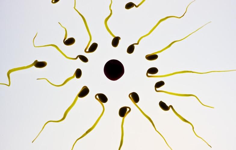 Extra_large_spermy