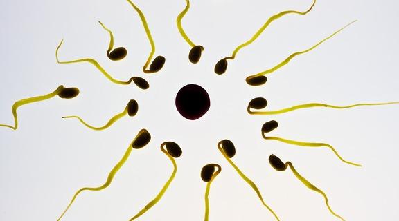 Homepage_spermy
