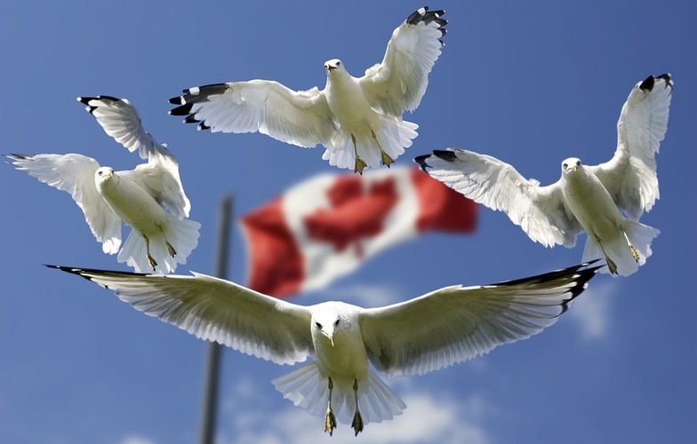 Extra_large_flags-formation-blue-sky-gulls-color-flag-540791