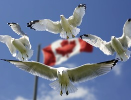 Small_flags-formation-blue-sky-gulls-color-flag-540791