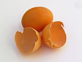 Small_eggshell_001