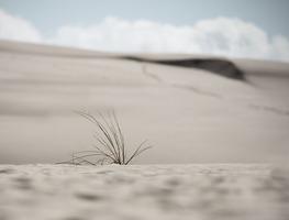 Small_dunes-3580666_960_720