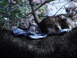 Small_cats-4053586_960_720