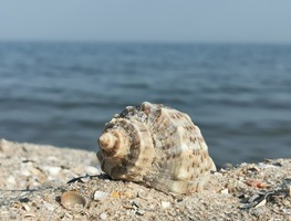 Small_shell-5381561_1280