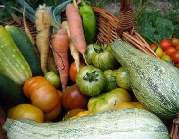 Large_sareni_plodovi