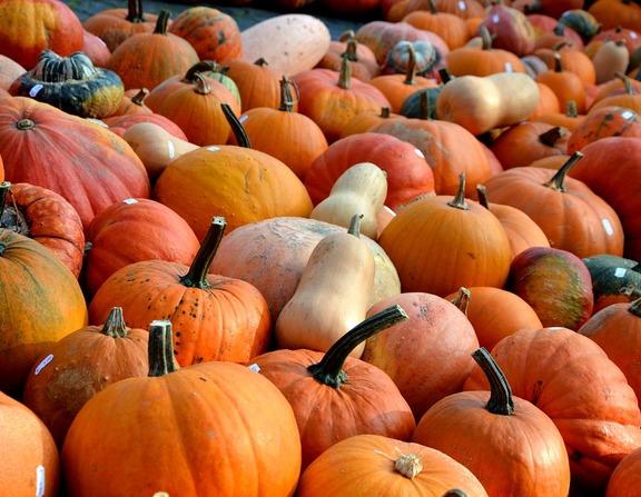 Large_pumpkins-506422_960_720