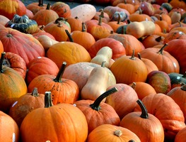 Small_pumpkins-506422_960_720