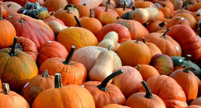 Wide_pumpkins-506422_960_720