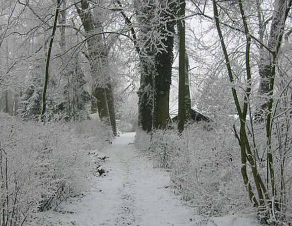 Large_the_footpath_to_my_previous_home_on_the_wickenburgh_estate_near_utrecht_holland._on_many_winter_days__the_only_footsteps_in_the_snow_were_mine._plus_the_ones_from_animals.__9443486862_