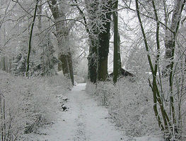 Small_the_footpath_to_my_previous_home_on_the_wickenburgh_estate_near_utrecht_holland._on_many_winter_days__the_only_footsteps_in_the_snow_were_mine._plus_the_ones_from_animals.__9443486862_