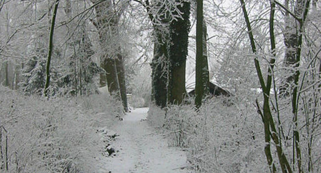 Wide_the_footpath_to_my_previous_home_on_the_wickenburgh_estate_near_utrecht_holland._on_many_winter_days__the_only_footsteps_in_the_snow_were_mine._plus_the_ones_from_animals.__9443486862_